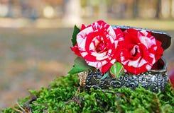 Tuin met floristische decoratie, floristicsontwerp Stock Afbeeldingen