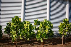 Tuin met groene boomgaard volledige hd stock foto