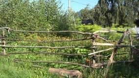 Tuin met houten omheining met serre en installaties het groeien wordt ingesloten die panning 4K stock video