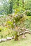 Tuin met installaties en bloemen rond groen gebied van gras stock afbeelding