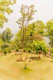 Tuin met installaties en bloemen rond groen gebied van gras stock afbeeldingen