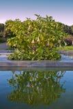 Tuin met laguna Royalty-vrije Stock Afbeelding