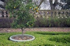 Tuin met oranje boom Stock Afbeeldingen