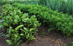 Tuin met plantaardige bedden Stock Afbeelding