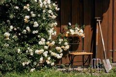 Tuin met rozen en hulpmiddelen wordt afgeworpen dat stock foto's
