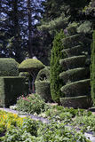 Tuin met Topiary Stock Foto