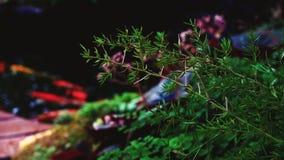 Tuin met vissen kleurrijke installaties stock videobeelden