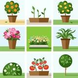 Tuin, moestuin, bloemen, bomen, struiken, bloembedden, gekleurde pictogrammen, Stock Afbeeldingen
