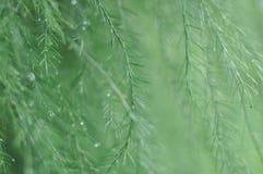 Tuin na de regen Stock Fotografie