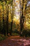 Tuin in Nationaal Park van Peneda Geres stock afbeelding