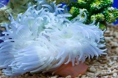 Tuin onder het overzees Royalty-vrije Stock Afbeelding