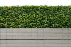 Tuin op een baksteenomheining Royalty-vrije Stock Afbeelding