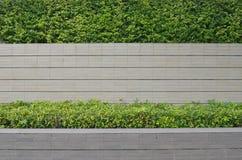 Tuin op een baksteenomheining Royalty-vrije Stock Fotografie