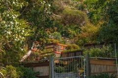 Tuin op een zeer steile helling in Nieuw Zeeland royalty-vrije stock afbeeldingen