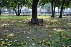 Tuin, Park, seizoen, de herfstverlof, droevige ogenblikken Royalty-vrije Stock Foto's