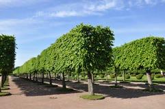 Tuin in stad Petergof Heilige Petersburg, Rusland Royalty-vrije Stock Foto's