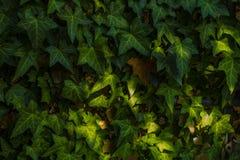 Tuin in Stedelijk royalty-vrije stock foto