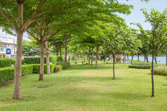 Tuin in Thailand Royalty-vrije Stock Afbeeldingen