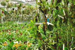 Tuin tropische installaties Stock Afbeeldingen