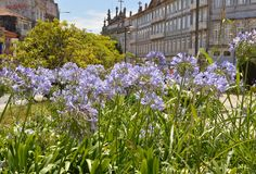 Tuin van een Portugees vierkant Royalty-vrije Stock Afbeelding