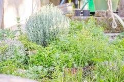 Tuin van geneeskrachtige kruiden stock afbeelding