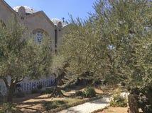 Tuin van Gethsemane in Jeruzalem, Israël Royalty-vrije Stock Foto's