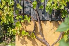 tuin van het zuiden de Duitse plattelandshuisje Stock Afbeelding