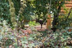 tuin van het zuiden de Duitse plattelandshuisje Stock Fotografie