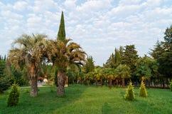 Tuin van naaldbomen royalty-vrije stock foto's