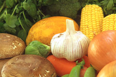 Tuin Vers Voedsel Stock Fotografie
