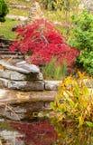 Tuin Water De herfst kleur installaties royalty-vrije stock afbeeldingen