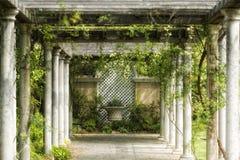 Tuin, wijnstokken, gang stock fotografie