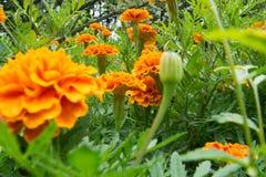Tuinachtergrond en bloemversheid stock afbeelding