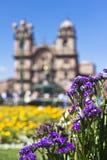 Tuinbloemen in Cuzco, Peru Royalty-vrije Stock Afbeeldingen
