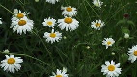 Tuinbloemen in de zomer stock footage