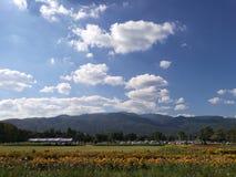 Tuinbloemen in een duidelijke dag Stock Fotografie