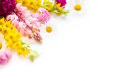 Tuinbloemen op wit Royalty-vrije Stock Foto