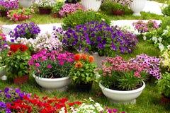 Tuinbloemen van verschillende kleuren in potten Royalty-vrije Stock Afbeeldingen