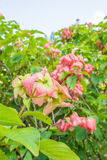 Tuinboom, vers blad na het regenen Royalty-vrije Stock Fotografie