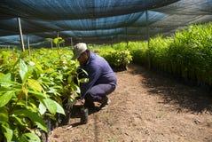 tuinbouw stock afbeelding