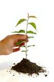 Tuinbouw Stock Fotografie