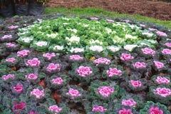 Tuinbouw royalty-vrije stock afbeelding