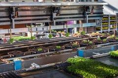 Tuinbouw die machines planten Stock Fotografie