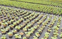 Tuinbouw landbouwbedrijf Royalty-vrije Stock Afbeeldingen
