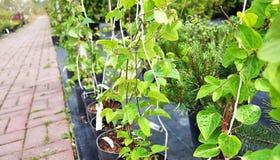 Tuincentrum voor de verkoop van installaties Hier kunt u heel wat verscheidenheden van groene installaties kopen: diverse bloemen stock foto