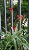 Tuindecor door vlinder stock foto