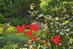 tuinen Stock Afbeelding