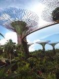 Tuinen door de baai Stock Fotografie