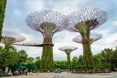 Tuinen door de baai met het Supertree-Bosje in Singapore stock foto