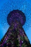 Tuinen door de boom van het baaimonster stock afbeelding